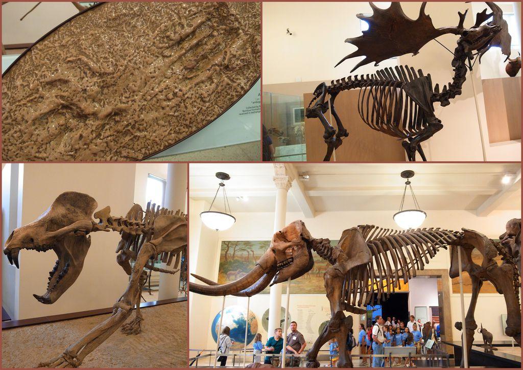 2010-07-29 自然歷史館19.jpg