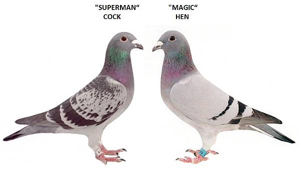 SupermanXMagic Hen.jpg