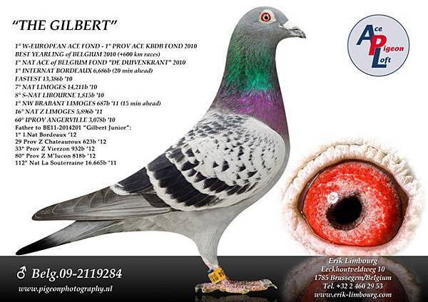 Gilbert 2119284-09.jpg