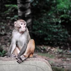 猴子下圍棋