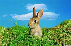 獵場上的兔子
