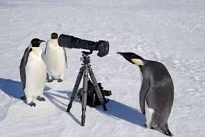 日用攝影師