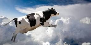 牛的母愛親情