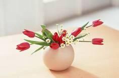 奇妙的一盆花