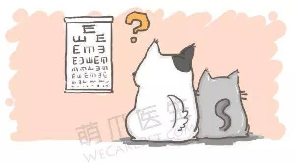 眼角膜.jpg