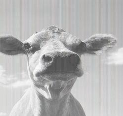 雞首與牛後孰重要?