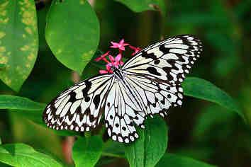 經濟上的蝴蝶效應
