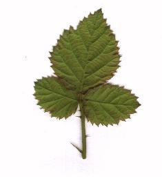 為生命畫一片樹葉