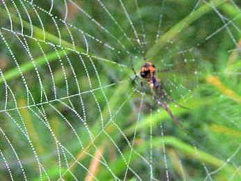 會飛的蜘蛛