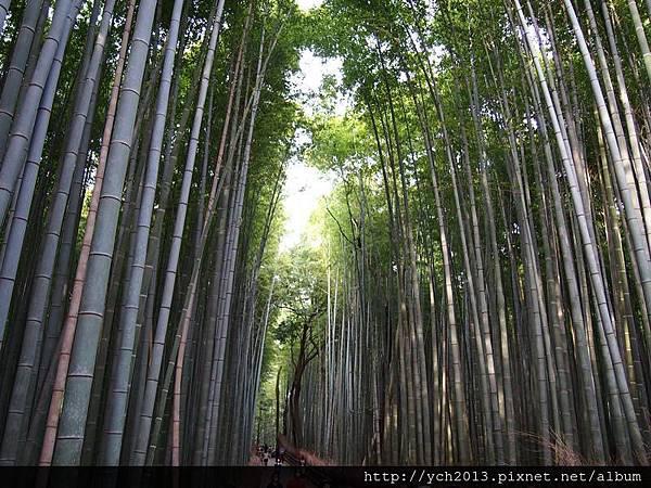 20130405嵐山 (4).JPG