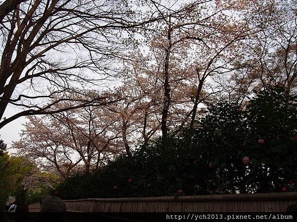 20130405嵐山 (5).JPG
