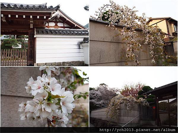 20130405嵐山 (6).jpg