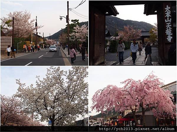 20130405嵐山 (7).jpg