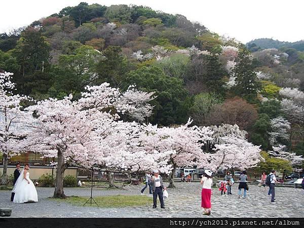 20130405嵐山 (17).JPG