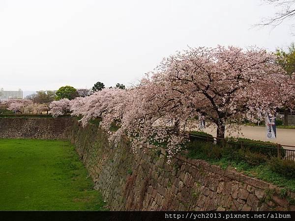 20130406大阪城 (7).JPG