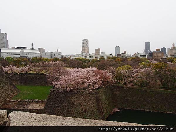 20130406大阪城 (12).JPG