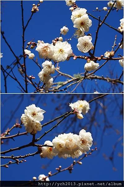 20130101梅林 (5-1).jpg