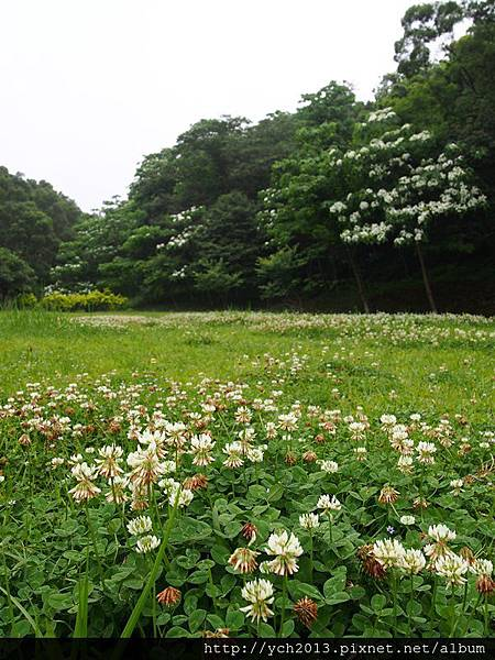 20140419養生村 (7).JPG
