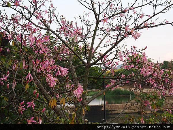 20140907東安古橋 (15).JPG
