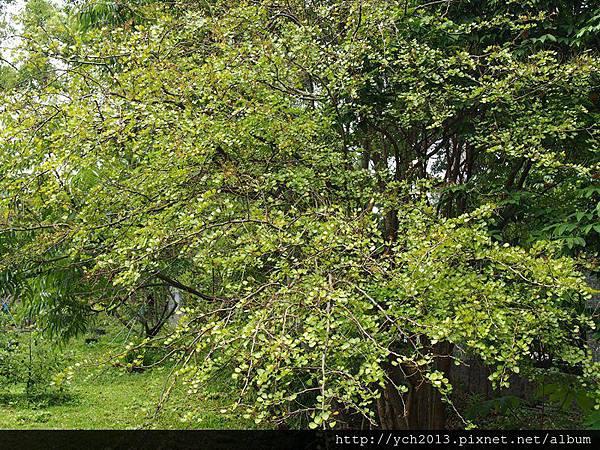 20140427 藥用植物園 (35).JPG