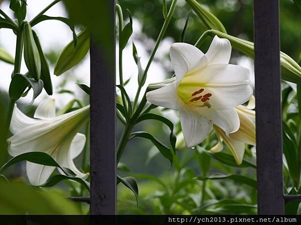 20140427 藥用植物園 (47).JPG