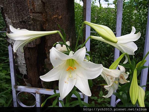 20140427 藥用植物園 (51).JPG