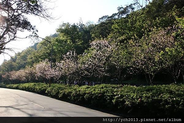 陽明山公園(5).JPG