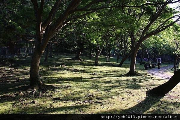 陽明山公園(6).JPG