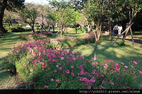 陽明山公園(14).JPG