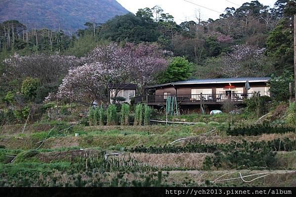 陽明山公園(21).JPG