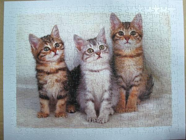 300 - 三隻小貓10.jpg