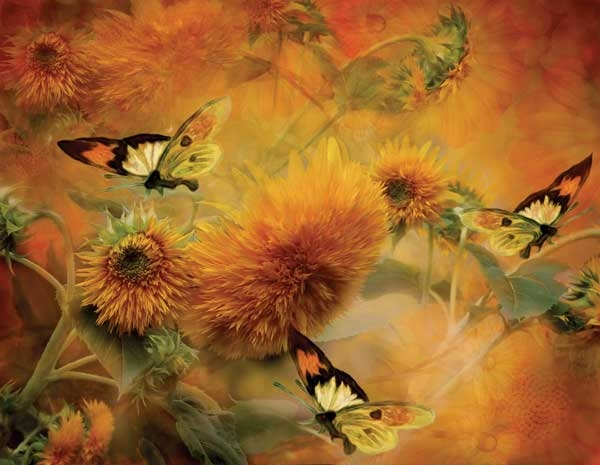 55643butterfliesandsunflowerscat-600x600.jpg
