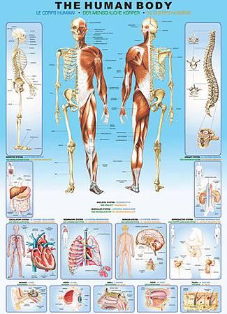 Human Body1000EUR.jpg