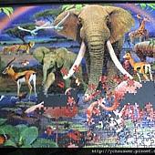 1000 - African Savannah13.jpg