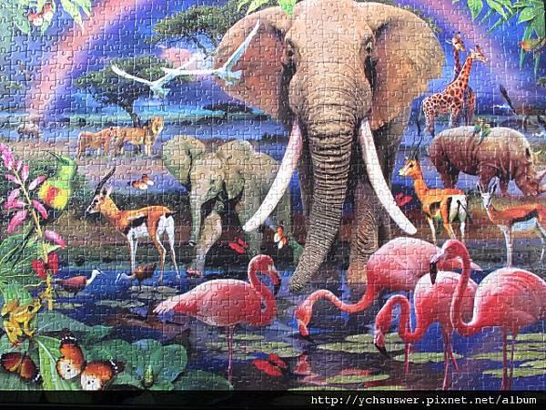 1000 - African Savannah16.jpg