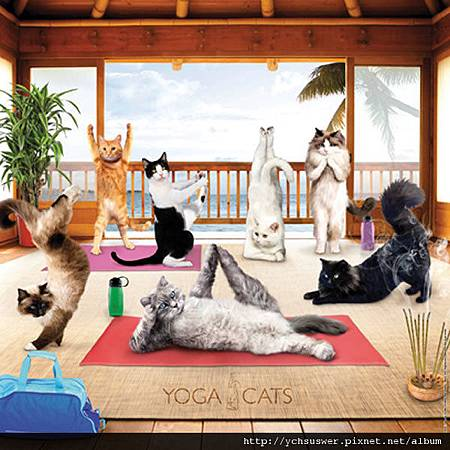 O59608-Yoga Cats Square Jigsaw Puzzle-w