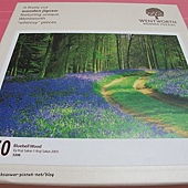 250 - Bluebell Wood01.JPG