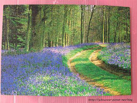 250 - Bluebell Wood07.JPG