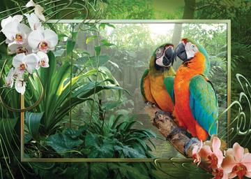 Cozy Macaws.jpg