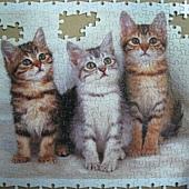300 - 三隻小貓08.jpg