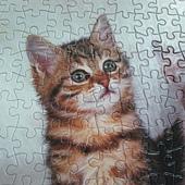 300 - 三隻小貓11.jpg