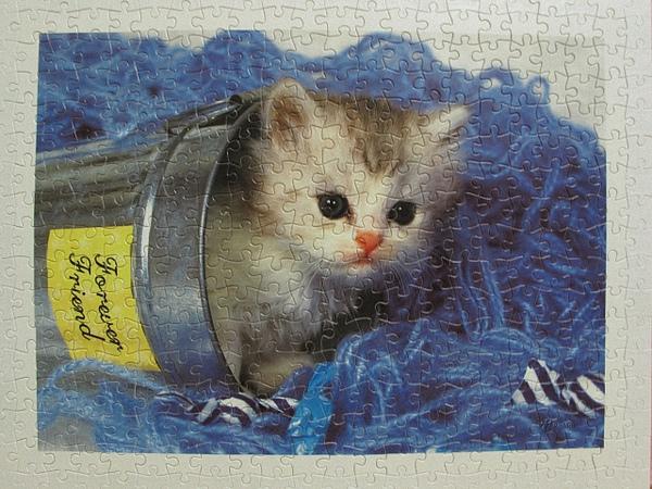 300 - 好奇小貓23.jpg
