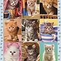 Peek-A-Boo Kittens Multi-picture.jpg