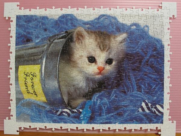 300 - 好奇小貓21.jpg
