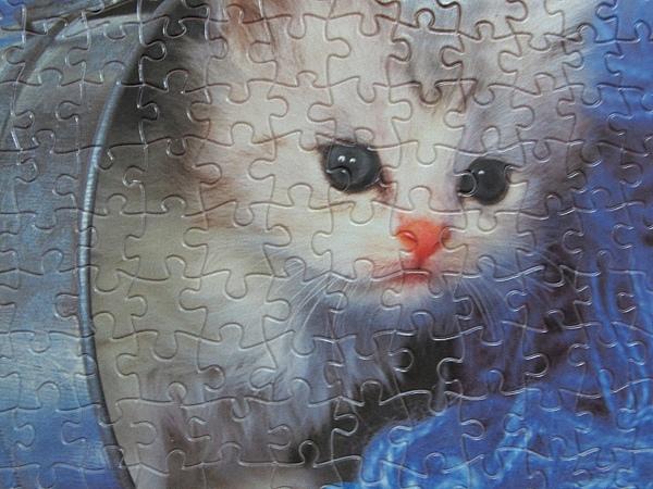 300 - 好奇小貓20.jpg