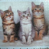 300 - 三隻小貓09.jpg