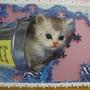 300 - 好奇小貓15.jpg
