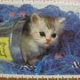 300 - 好奇小貓17.jpg
