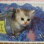 300 - 好奇小貓16.jpg
