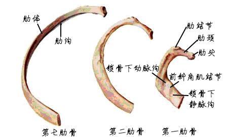 中軸骨_7.JPG